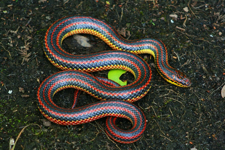 RainbowSnake-edit